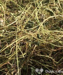 Hình ảnh trà dây khổ qua rừng Dược Liệu Thái Sơn cung cấp